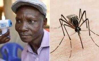 Pria Dengan Kentut Berbahaya Ini Diincar Perusahaan Pestisida